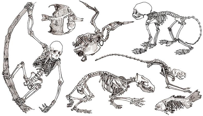 Anna lubinski illustration carnets de croquis - Dessin de squelette ...